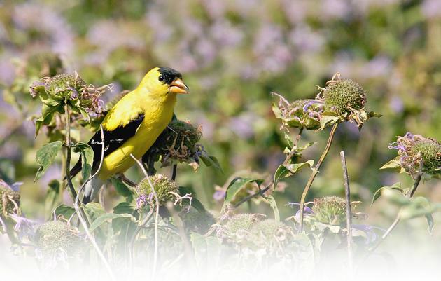 Native Plants for Native Birds