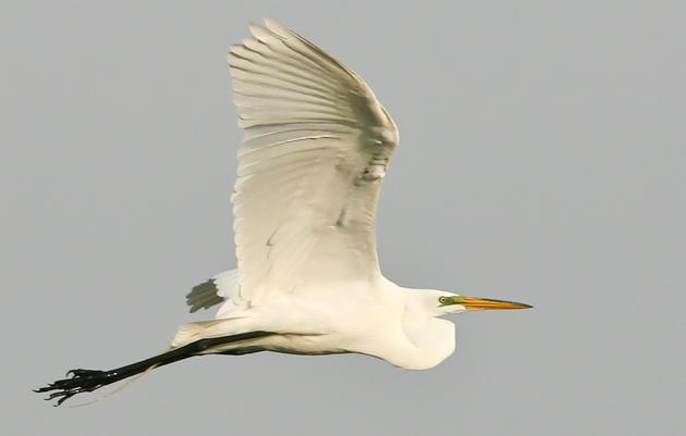 Audubon Minnesota Team