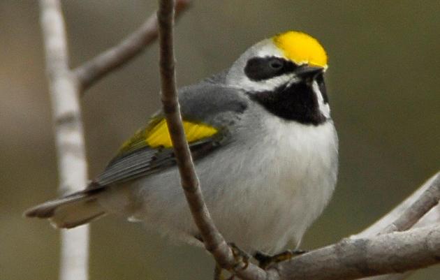 Project BirdSafe