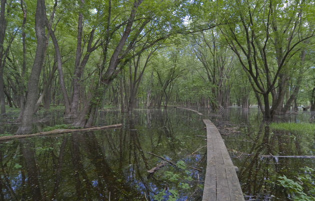 Saving Floodplain Forests