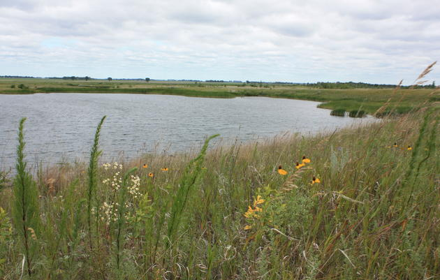 Minnesota Important Bird Areas