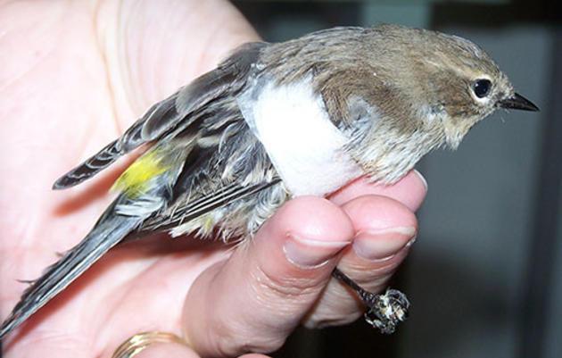 Find an injured or dead bird?