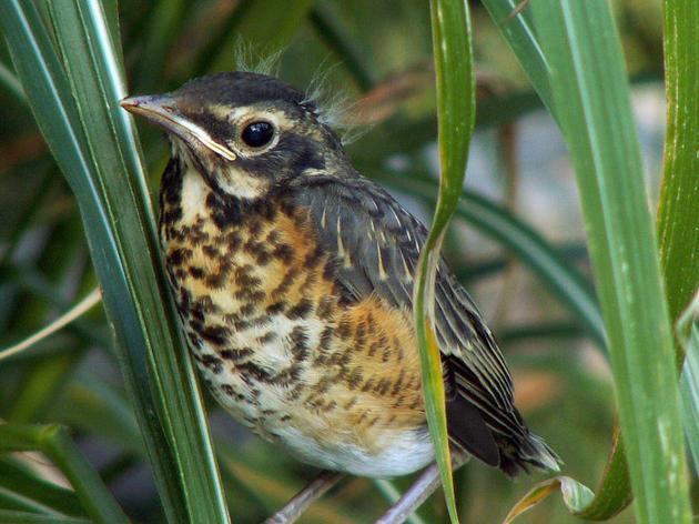 Bird-window Collisions FAQ