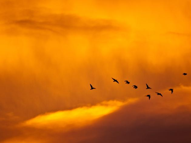 Birds and Climate