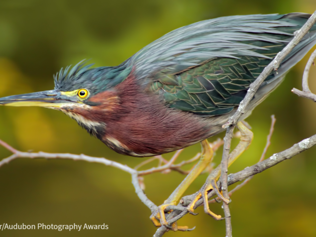 Birds in Focus brings together birds and photography