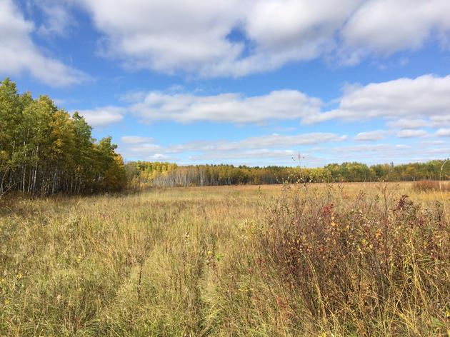 240 Acres of Important Bird Habitat Now Permanently Protected in Northwest Minnesota