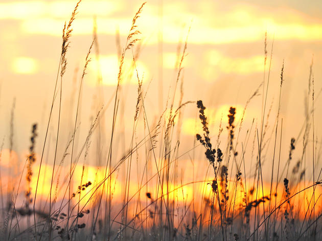Audubon Minnesota applauds Xcel for requiring solar proposals to disclose vegetation details