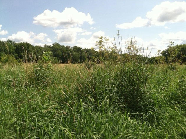 Restoring Floodplain Forests in the Vermillion Bottoms and Lower Cannon River IBA