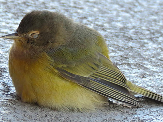 BirdSafe Research