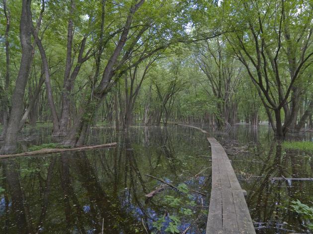 Saving Floodplain Forests