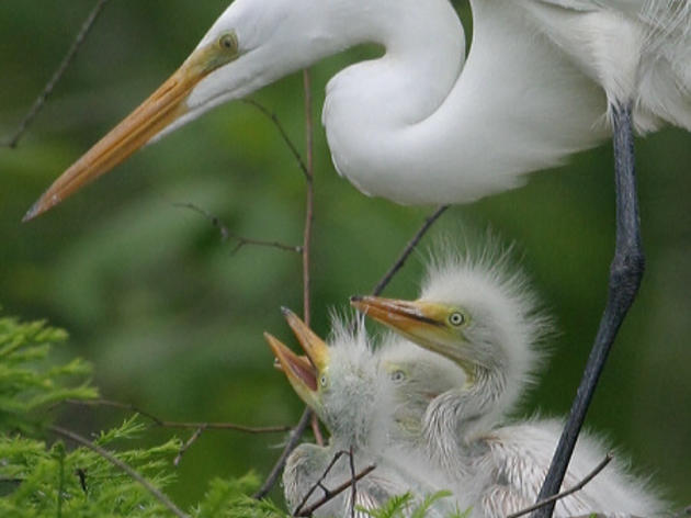 More Than 500 Conservation Groups in All 50 states to Urge Congress to Defend Bird Protection Law