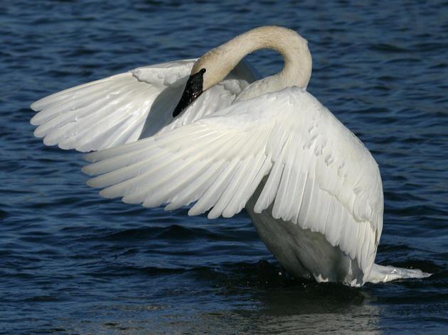 Minnesota Birds and Climate