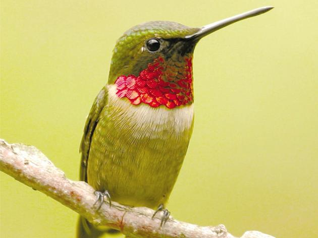 Creating Bird-Friendly Communities